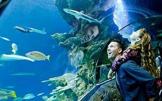 האקווריום של לונדון - Sea Life London Aquarium