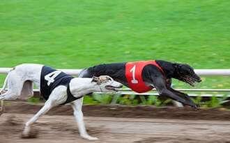 מירוצי כלבים בלונדון - London dog racing